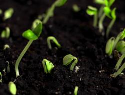 Semaine du developpement durable