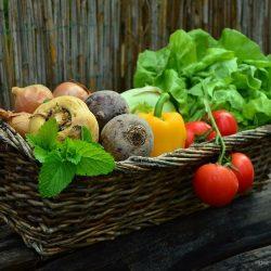 Potager, fleurs et cie- Jardinage